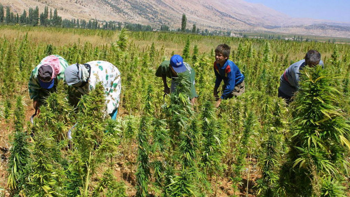 Lebanon has cultivated cannabis for at least 100 years. [AFP]